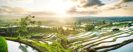 Beautiful sunrise over rice terraces in Bali Province, Indonesia.