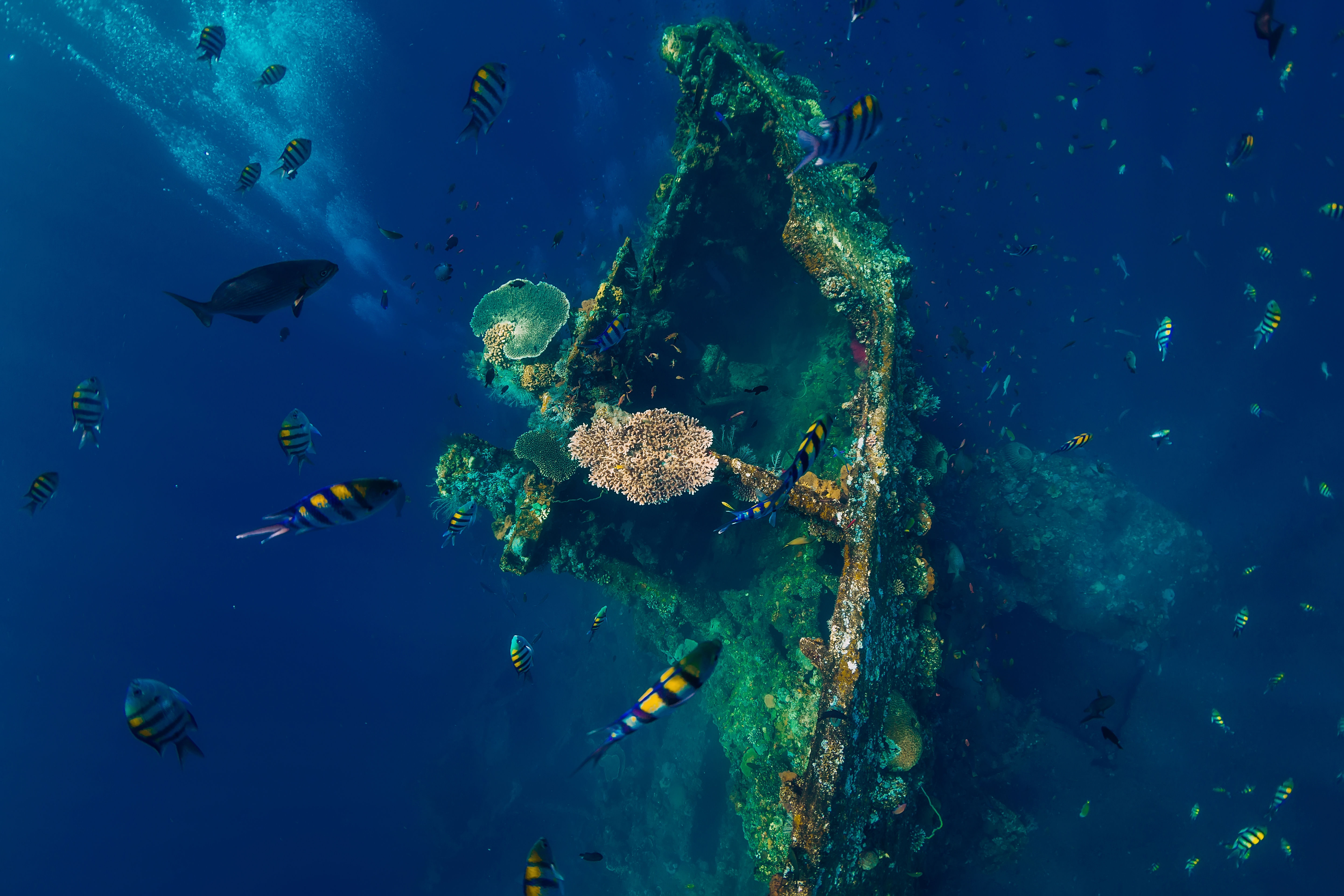 Underwater photo of the USAT Liberty wreck in deep blue water, corals, fish and divers bubbles, lying off the coast of Tulamben in Bali.