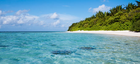 Tropical white sand beach with clear blue water and palm trees in Vaavu Atoll, Maldives.