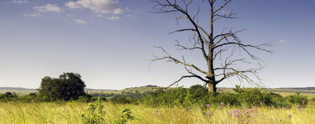 Lonely tree in Rietvlei Nature Reserve, Gauteng, South Africa